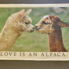 tea towel kissing alpacas
