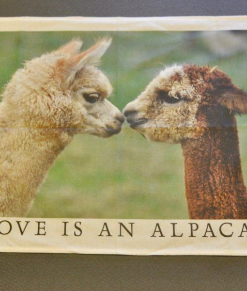 tea towel kissing alpacas