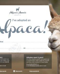 Alpaca Adoption
