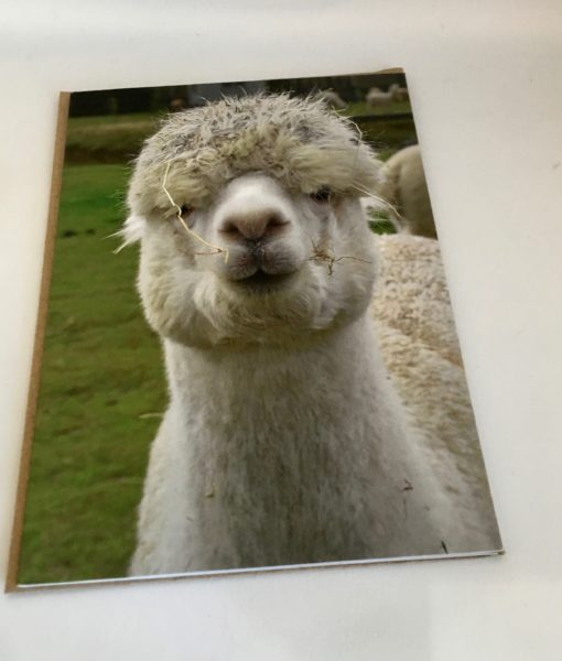 Alpaca greeting card - Andy Pandy