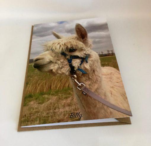 Alpaca greeting cards Billy