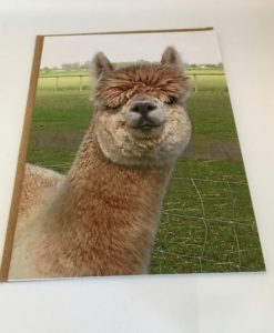 Alpaca greeting card - Stu Pot