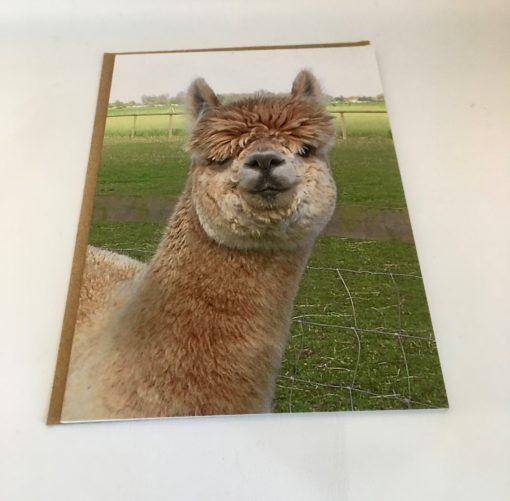 Alpaca greeting card - Stu Pot